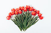 Big bouquet of red tulips on a white background