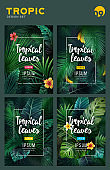 Set of Bright tropical background with jungle plants. Exotic pattern with tropical leaves