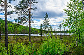 Landscape of the Kuntijarvi lake