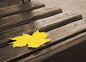 Yellow maple leaf lies on a monochrome wooden bench. Symbol of autumn
