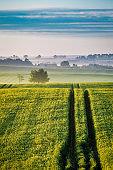 Stunning sunrise at foggy green field in summer, Europe
