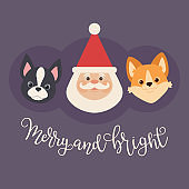 Santa Claus with two puppies: welsh corgi and boston terrier