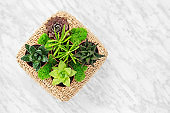 Home decor arrangement with succulent plants and moss