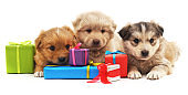 Three puppies with gifts.