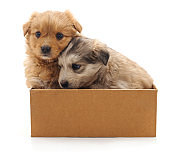 Two puppies in the box.