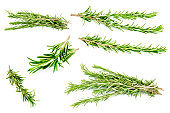 Rosemary collection set cut out on white background