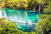 A submerged tree in a blue lake, Plitvice lakes.