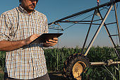 Serious concerned farmer using tablet computer