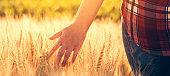 Female farmer touching barley crop