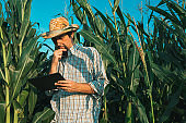Farmer agronomist with tablet computer in corn crop field