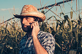 Portrait of serious farmer talking on mobile phone in cornfield