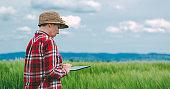 Female farmer using tablet computer in rye crop field