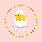Cute little chick with egg shell on forsythia flowers wreath background