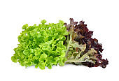 fresh red and green oak lettuce salad leaves isolated on white background