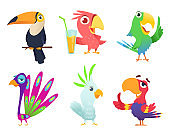 Tropical parrots characters. Feathered exotic macaw birds pets colored wings funny exotic flying arara action poses vector pictures