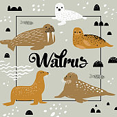 Childish Design with Seal and Walrus. Cute Background with Abstract Elements. Baby Oceanic Doodle for Decoration, Birthday Invitation. Vector illustration