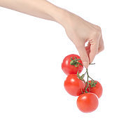 Branch with tomatoes in hands