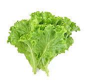Butter head lettuce