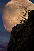 Super moon with lone tree