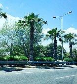 Green palm trees near a road