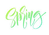 Spring handwritten lettering. Beautiful modern calligraphy. Isolated on white for easy use. Vector illustration