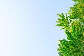 Beautiful green  tree sky background