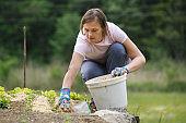 Woman gardener planting salad and mulching it