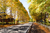 Autumn leaves of Karuizawa