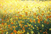 Yellow flower garden in park