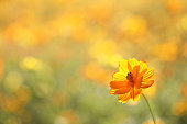 Yellow flower in close up