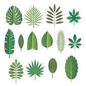 Set of leaves of tropical plants. Vector illustration.
