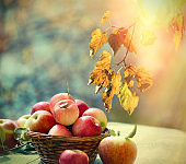 Autumn harvest, healthy food, healthy apple in wicker basket on table