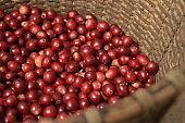 Fresh coffee bean