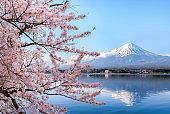 Mount fuji at Lake kawaguchiko with cherry blossom in Yamanashi near Tokyo, Japan.