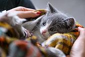 Holding a cute kitten