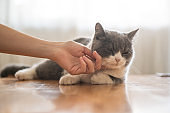 Touch the cute kitten with your hands