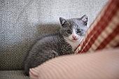Cute kitten, indoor shooting