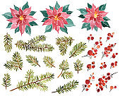 Watercolor set of Christmas evergreens. Poinsettia, holly berries and spruce