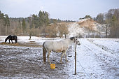 White horse in the snow