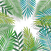 tropical and exotic palms leafs
