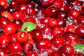 Whole cranberries cooking and boiling with pieces of jalepenos to make a hot and spicy cranberry sauce
