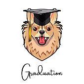 Chihuahua Dog Graduate. Graduation cap hat. Dog portrait. Vector.