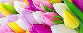 Tulips bouquet close up