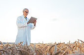 Agricultural scientist doing research in green biotech