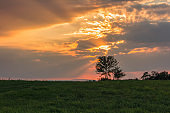 Meadow with tree silhouette with gold sunset sky