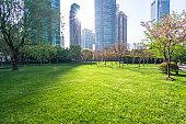 green lawn with modern building