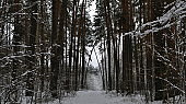 Winter tale.