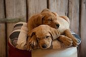 Two cute puppies sleeping