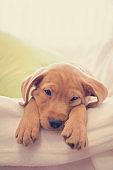 Headshot of sleeping puppy