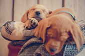 Two cute puppies sleeping